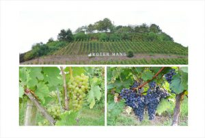 Wein vom Roter Hang